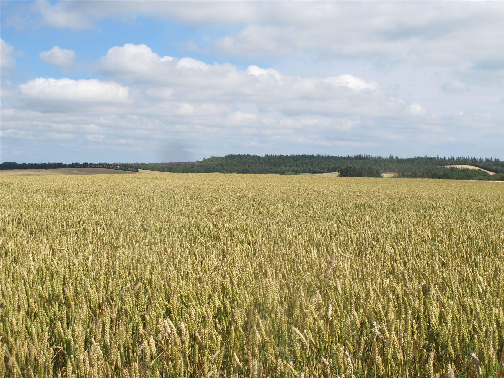 Planteavlsgårde/landbrugsjord til Salg - Vindingvej 2, jord, 6880 Tarm